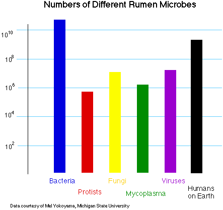 Hay más microorganismos en el rumen de una vaca que personas sobre el planeta! #microMOOC http://t.co/tYo4rpGd7S