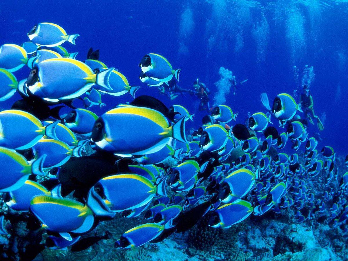 Blue Tang Clan #CalmDownABand http://t.co/LhXhs1T7aZ