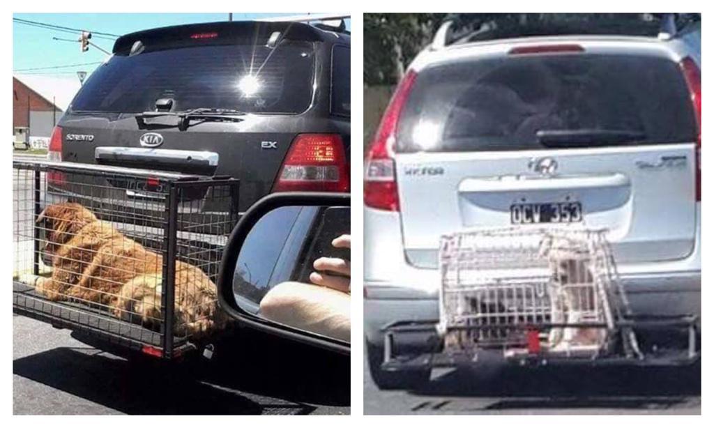 Por que no pondrán a sus hijos ahí... Tratemos mejor a los animales Cc @anitateatro http://t.co/Scz3lckMr3