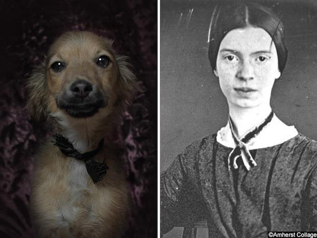 #EmilyDickinson © Dan Bannino + (http://t.co/z9VIRq0S3g) #poetic #dogs http://t.co/flYNRNpvKt