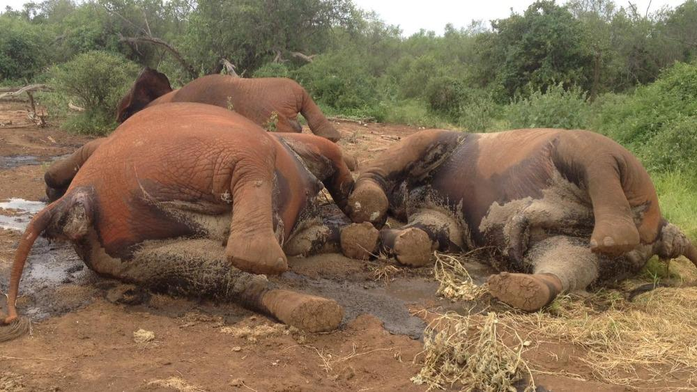 #Kenya: Tighten laws to save #elephants from #poaching http://t.co/8pqr1ljrXy #wildlife #conservation #africa http://t.co/JKQ08ND6J4