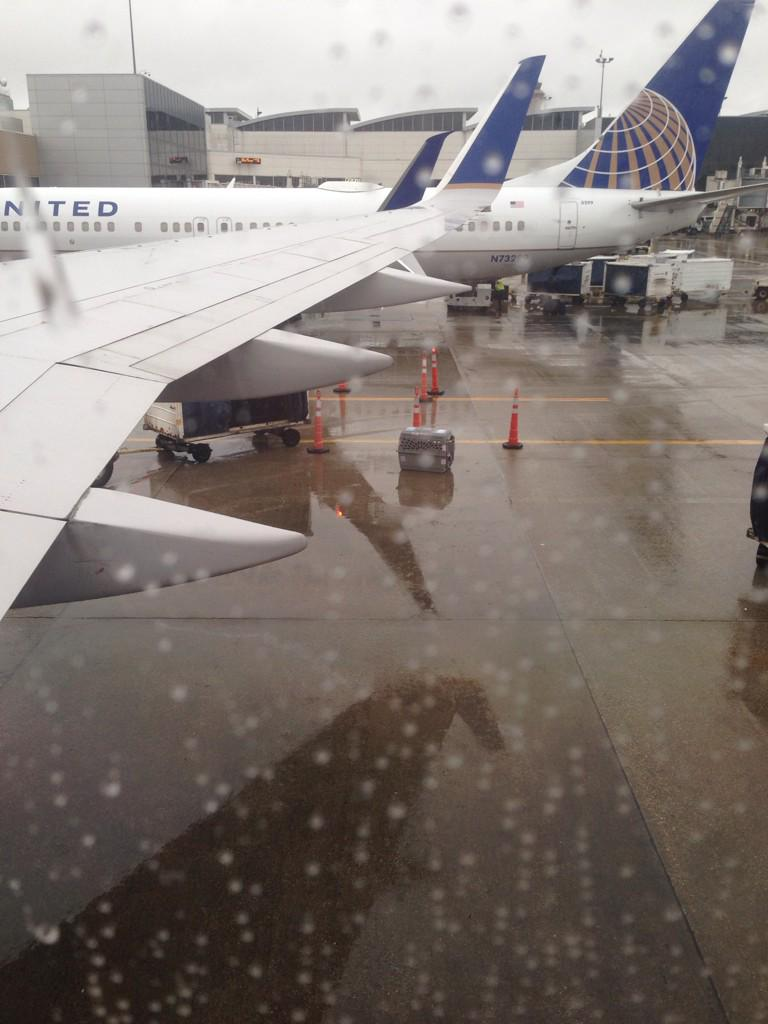 Dog Left on Rainy Tarmac: United Airlines Slammed