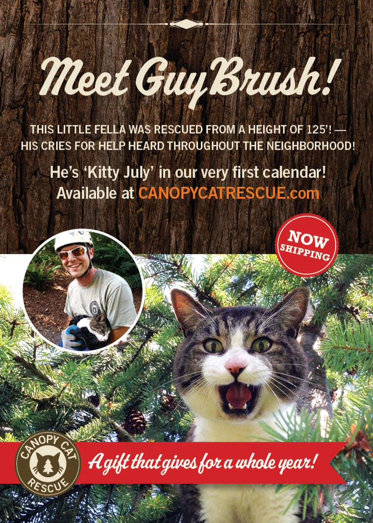 canopy cat rescue on twitter how can you help support ccr order a