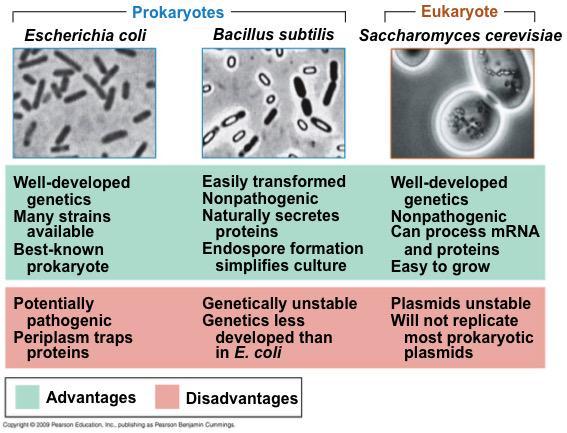 Ventajas y desventajas de algunos vectores microbianos para la clonación (en inglés) #microMOOC http://t.co/D9RlmYlwXl