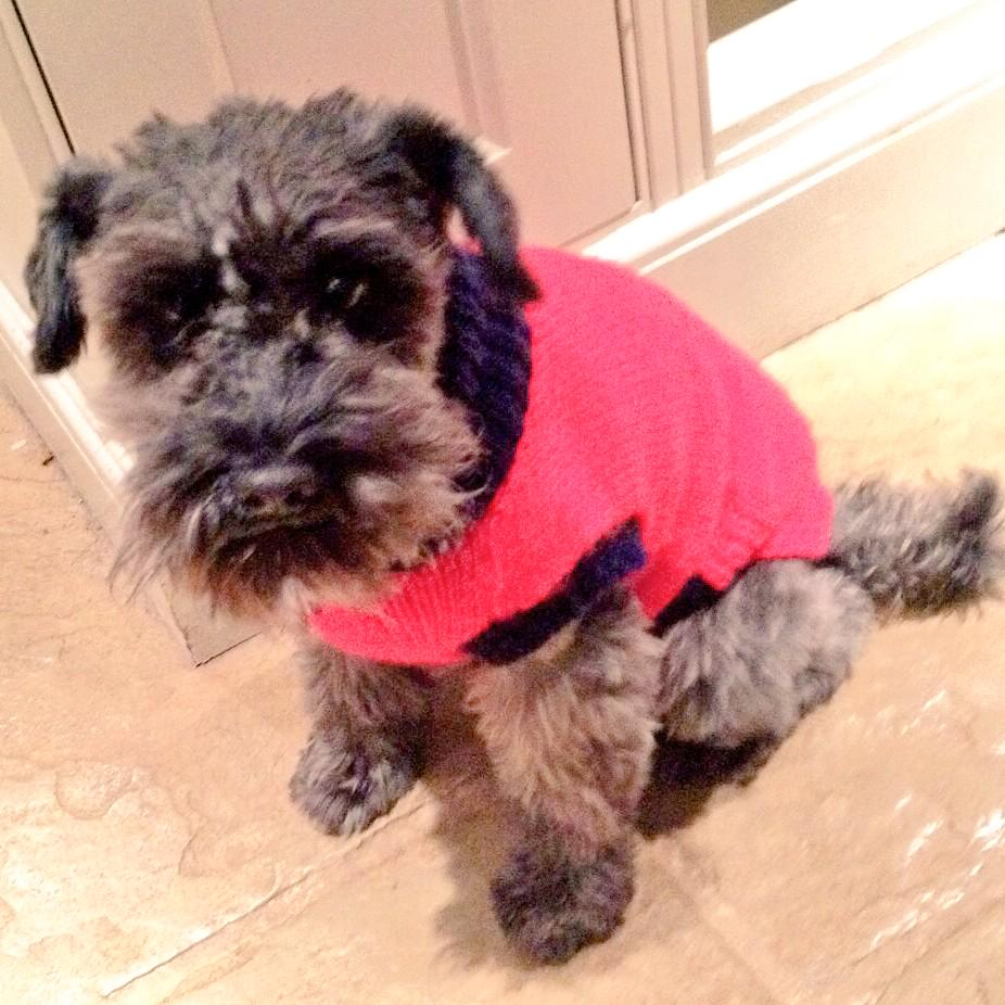 Dolly is pretty cold tonight.. So she's got her Xmas jumper on! 😍 http://t.co/o5f8awTN9t