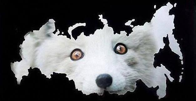 Путин устроил россиянам бессодержательное шоу и выглядел неуверенно: рассказывал анекдоты, вместо плана по спасению экономики, - Le Figaro - Цензор.НЕТ 2295