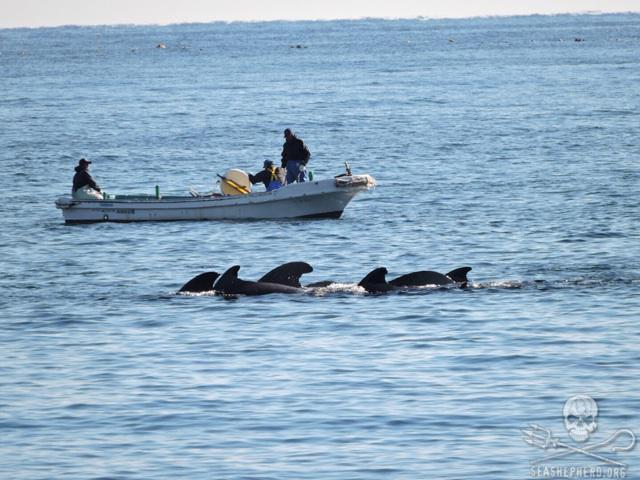 RT @CoveGuardians: Defenseless mothers & juveniles huddle together at the center of the cove. #carnagenotculture #tweet4taiji  10:27am http…