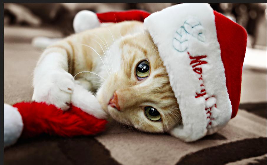 картинки новогодних котов на аву обращай внимание или
