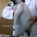 心が疲れてる方に見てほしい・・ささくれ立った心を一瞬で治すペンギン?!