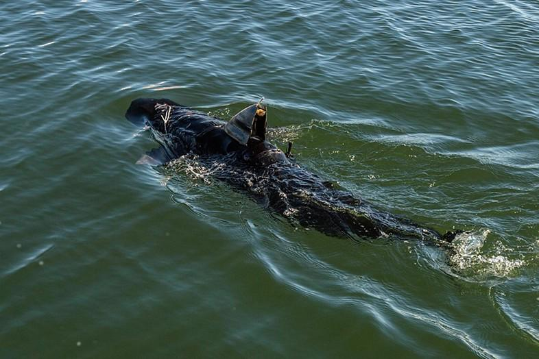 Not a fan of sharks? The US Navy's new GhostSwimmer drone is terrifying: http://t.co/9Bq2vhqlHh http://t.co/ZDoue1YcSO