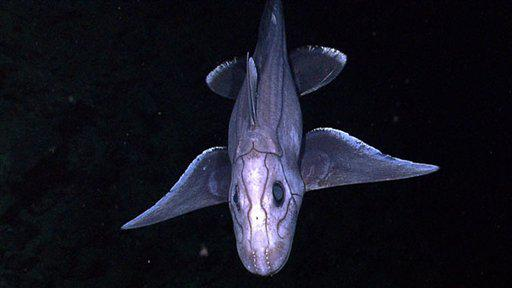 Amazing New Discovery, World's Deepest Fish Ever Found