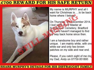 RT @chellychogs: @msm4rsh  please share #findmurphy with ur followers and make him too hot to handle. Thanks x http://t.co/VU8vpIeeQg
