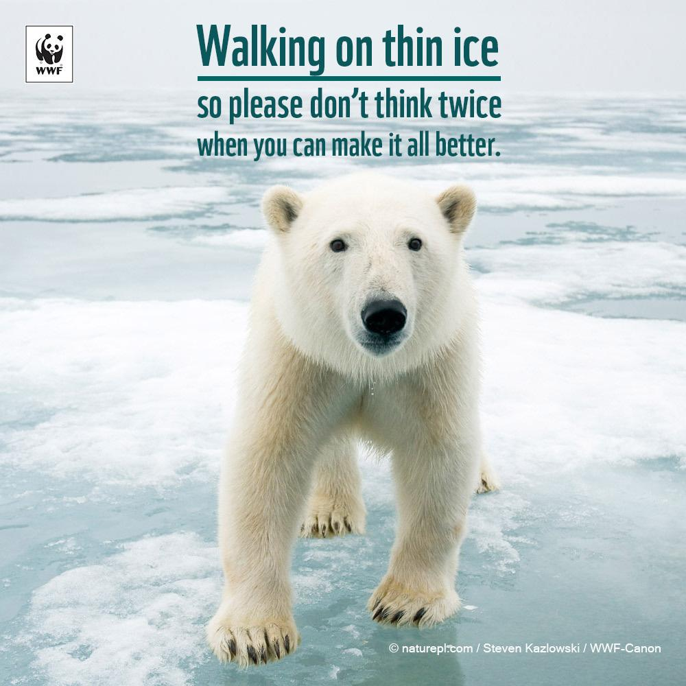RT @WWF: Walking on thin ice | so please don't think twice | When you can make it all better. Act: http://t.co/gWFuqMGRzS http://t.co/pWX5Y…