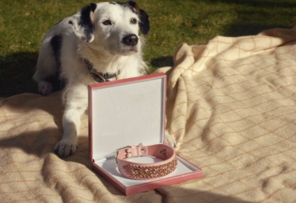 Harvey the dog's final ad to be aired on television on Boxing Day - take a look:  #advert... http://t.co/uMMFy6xQbO http://t.co/pdwyO83Q38