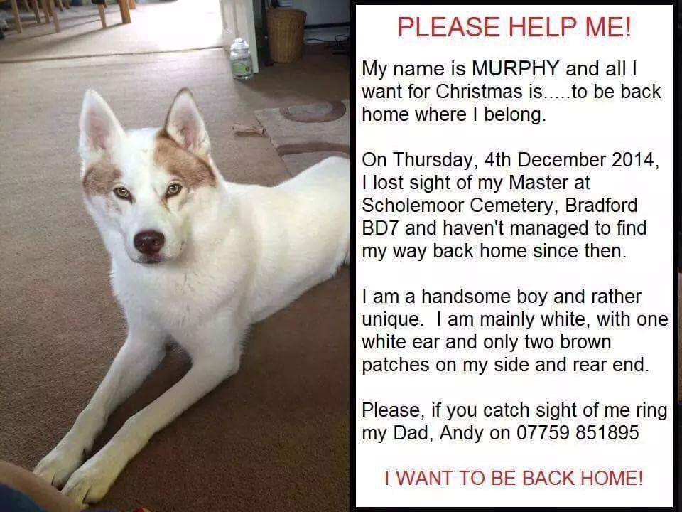 "RT @m_jai: ""@kirk_official you have such a huge fan base please retweet and help this furbaby x   @findmurphyhusky http://t.co/9AIZH2CZr4"""