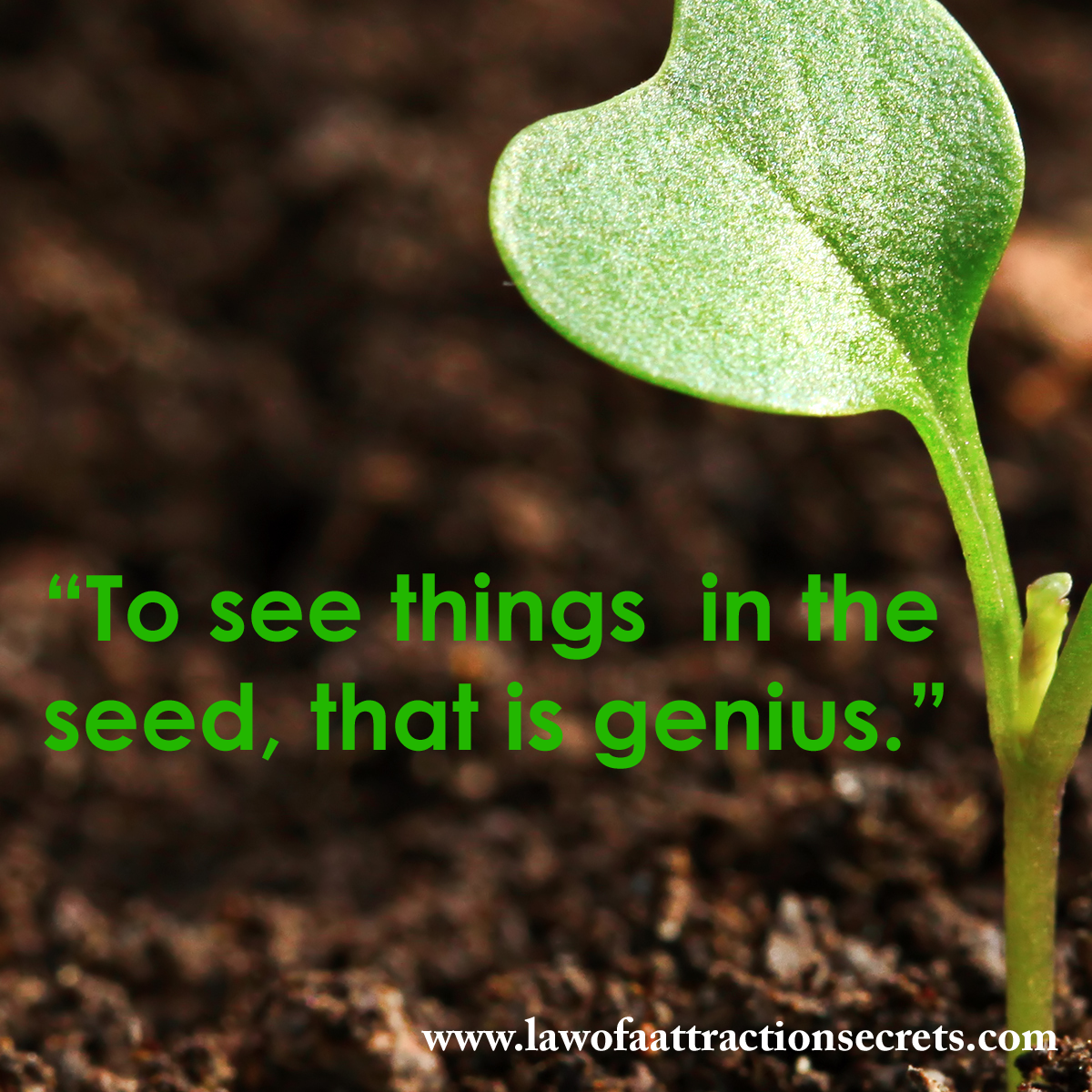 To see things in the seed, that is genius. http://t.co/OTSQAIby9u http://t.co/FIG4iXyjbq