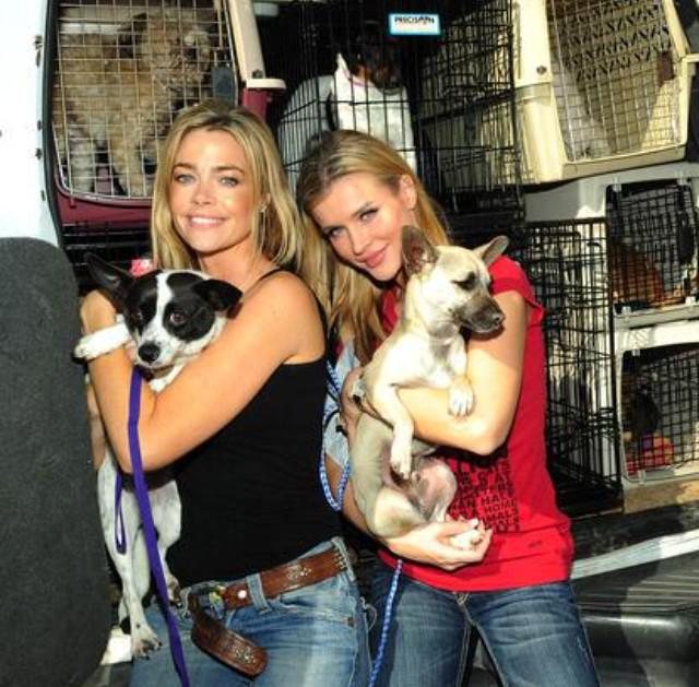 Xmas is a time of giving. please donate to our rescue @angels4animalre  http://t.co/EjiHJRH5Db @DENISE_RICHARDS http://t.co/MqTkei49jV