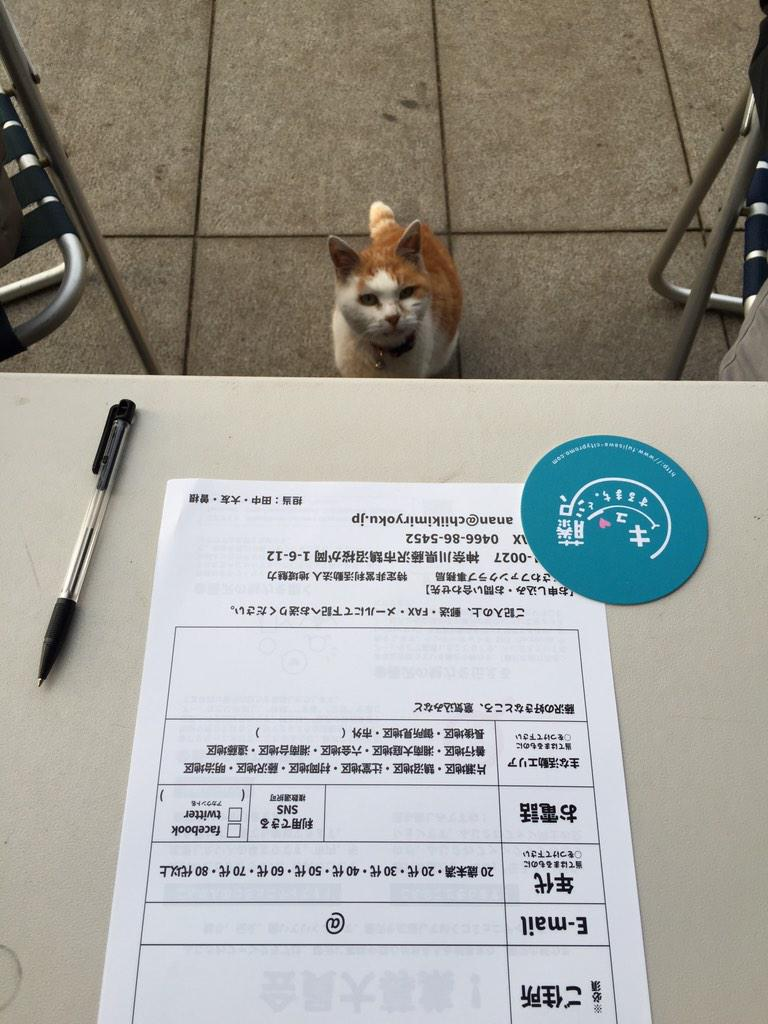 ねこがもうしこみにきた。 #藤沢キュン http://t.co/pMcxdm1C7q