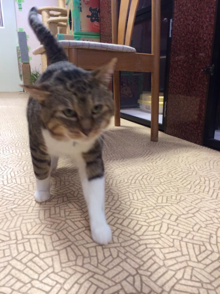 まだ19頭、家族募集中の被災猫がいます。福島・三春シェルター、年末年始も無休です。いつでもお問い合わせを。http://t.co/USk61z5KzN http://t.co/I9RU38K1gt