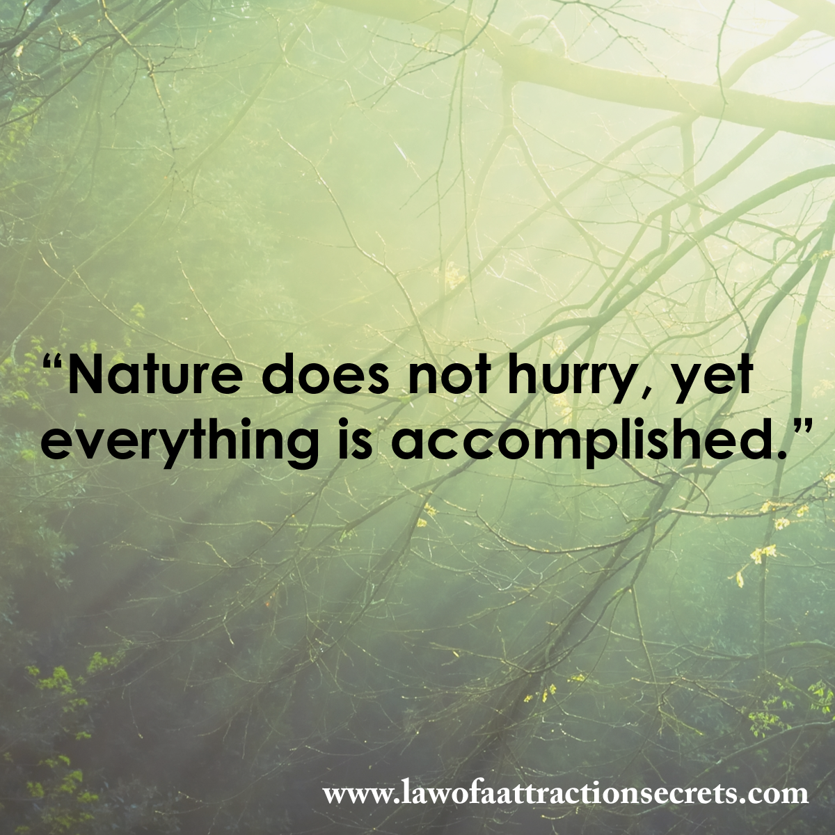 Nature does not hurry, yet everything is accomplished. http://t.co/OTSQAIby9u http://t.co/CqvBAcTjz6