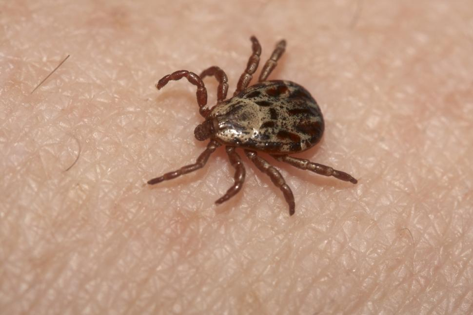 Salute News, virus Bourbon: Scoperta nuova malattia da puntura di zecche