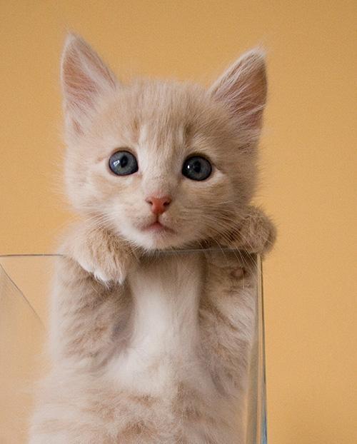 猫だらけの展覧会「人生はニャンとかなる!」- 西武池袋で開催 fashion-press.net/news/14439 写真は「甘え上手になろう」 pic.twitter.com/IFMRJreYtf