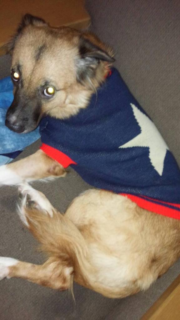 RT @sora_mayoiinu: 12月19日に居なくなった飼い犬ソラを探しています。 写真の服をきています。 居なくなった場所は大阪の住吉高校付近です。 お心当たりの方がいましたらよろしくお願いします。 #大阪 #迷い犬 https://t.co/gjPZfznGLo