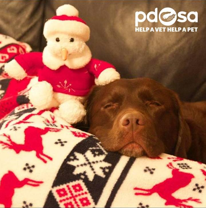 Oooh it's Xmas Eve & the big man's on his way! We're a little more excited than today's #AdventPet :) http://t.co/PGea9zjp43