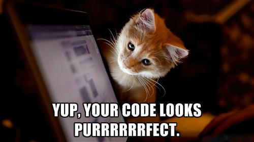 microsoft developer on twitter your code is now programmer cat