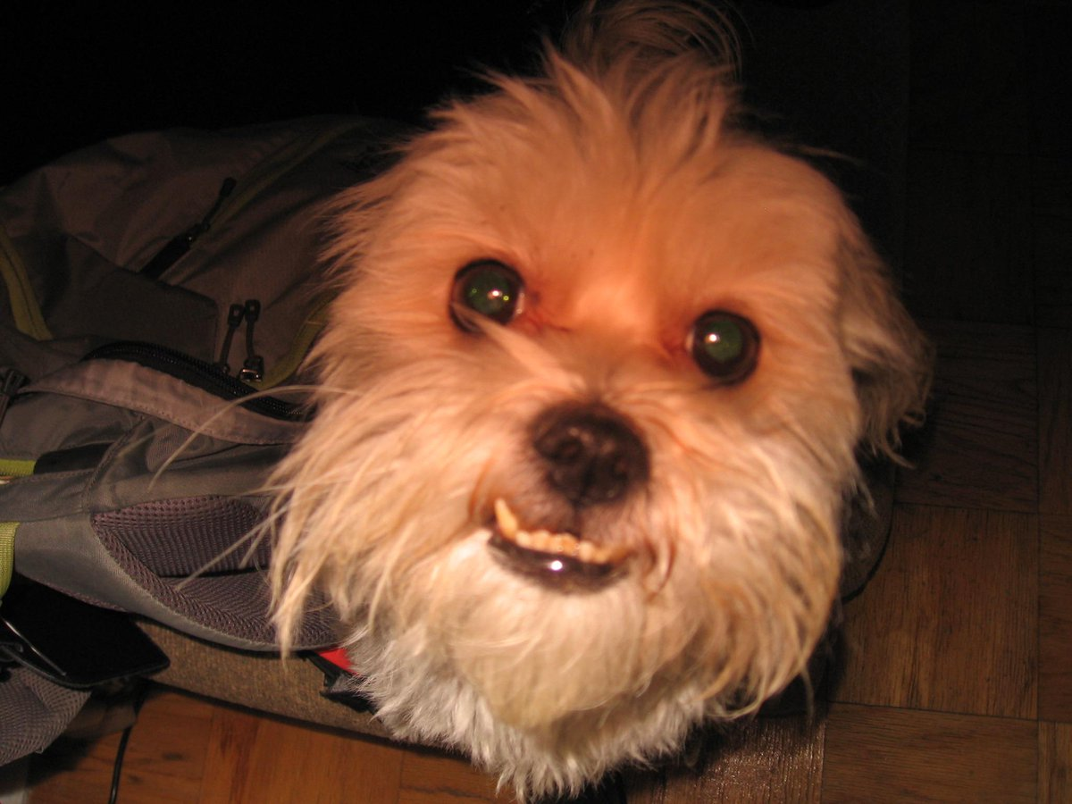One of my brother's friend's dogs. Shall make it famous via Twitter! Pls RT if you agree. #happydog http://t.co/i0nyNQS7Bp