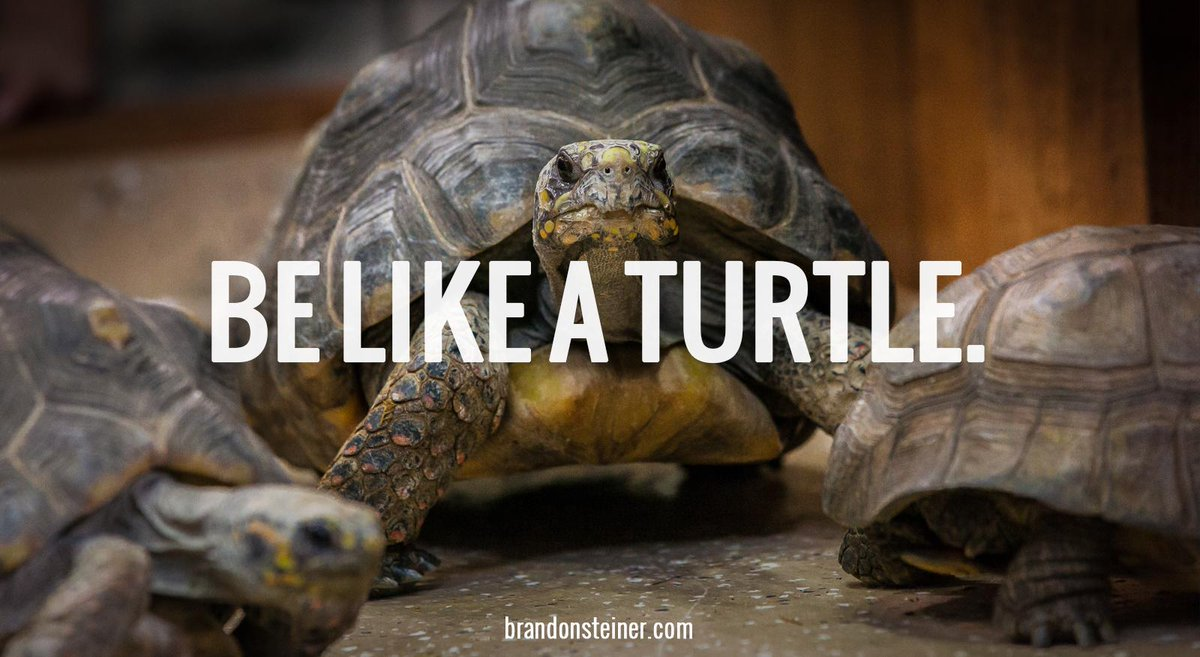 "Brandon Steiner On Twitter: ""Be Like A Turtle- Hard On The"