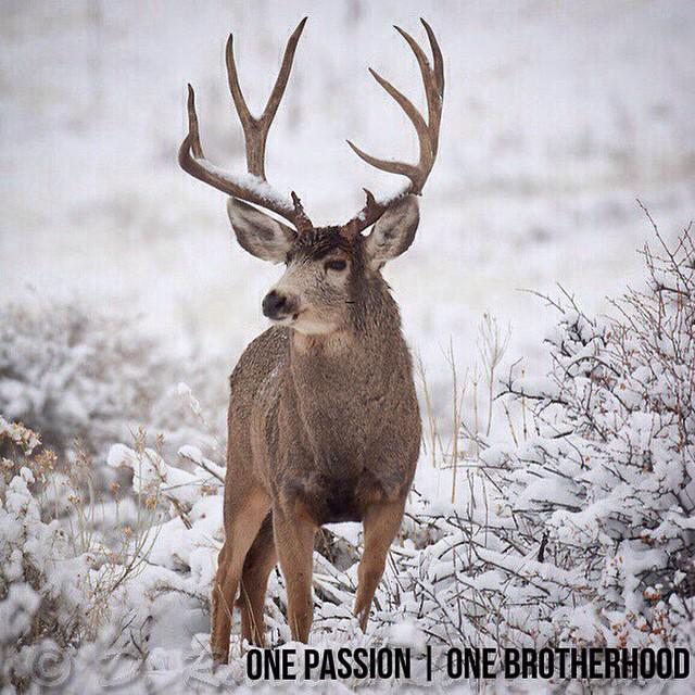 Buck Brothers (@Buck_Brothers) | Twitter