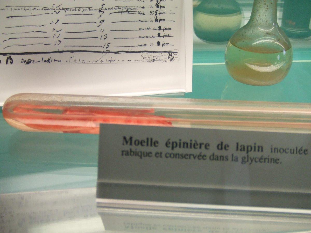 #Pasteur encontró que la rabia se transmite por algo no visible al microscopio un virus y creó la vacuna en 1885 http://t.co/Ts3wP6nyVZ
