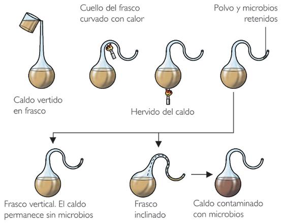 Los experimentos de #Pasteur demostraron que la hipótesis de la generación espontánea era una pipa http://t.co/JdL8edAFdH