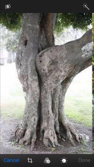 Have sex with trees foto 37