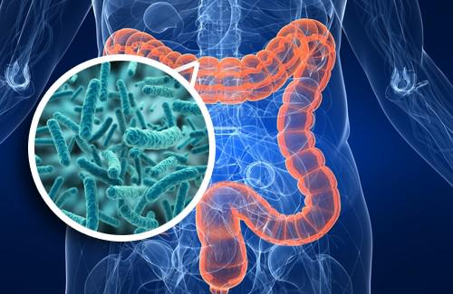"Ojo no lo repito: NO se dice ""microflora"" sino ""microbiota"", los microbios NO son plantas! #microMOOC http://t.co/I4ZQl2V32x"