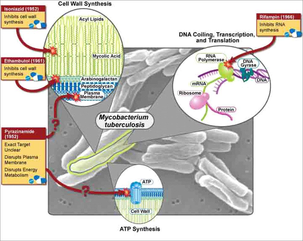 Dónde actúan Isoniazida, Rifampicina, Etambutol, Pirazinamida contra Mycobacterium tuberculosis #microMOOC http://t.co/pyxZZ32HeE