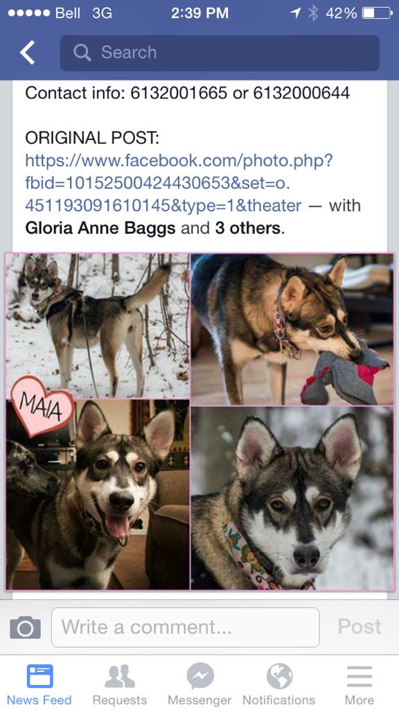 Ottawa folks, Maia is still missing out in the cold! Contact info in the pic if you spot her. TY @OttawaLostPet http://t.co/2NhRi4SbqK