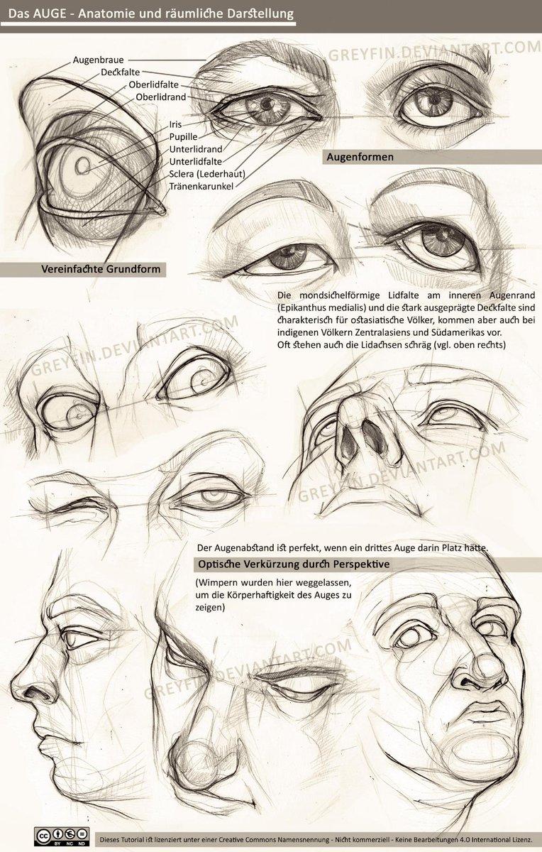 Erfreut Anatomie Um Das Auge Bilder - Menschliche Anatomie Bilder ...