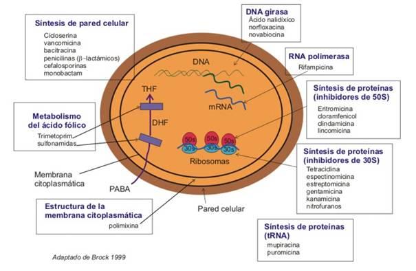 ¿Cómo actúan los antibióticos? #microMOOC http://t.co/tmKpu3YZWx