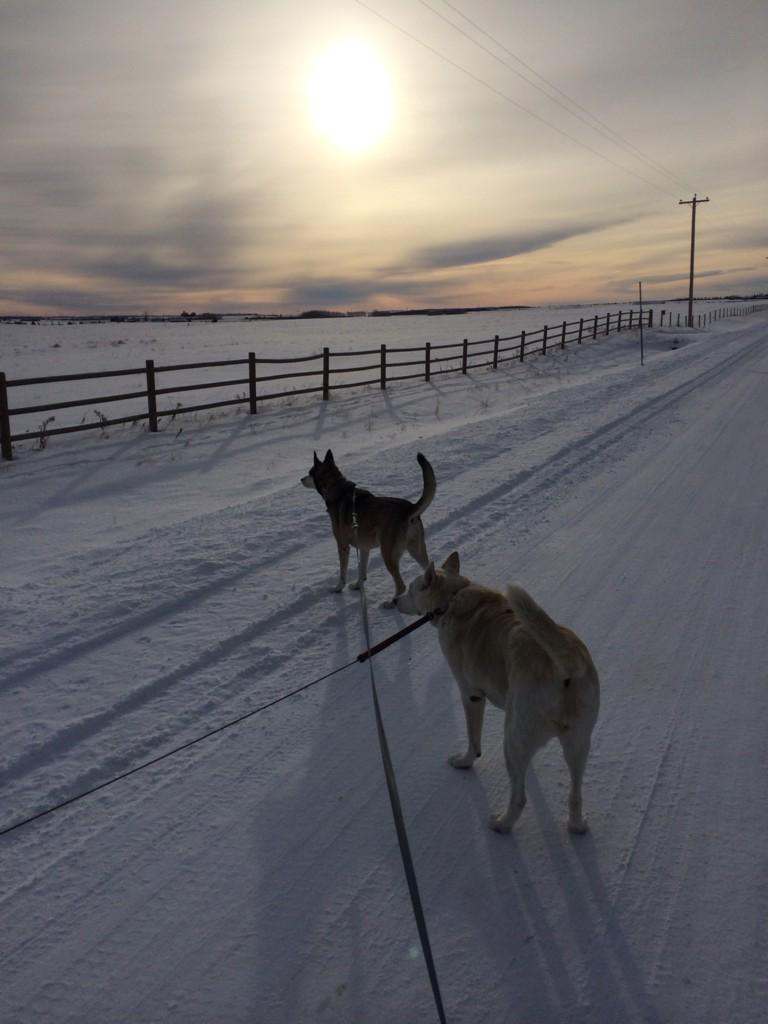 Walking the dogs with @jannarden -20c #Canada #beautiful #peace http://t.co/31aXp1Trmw