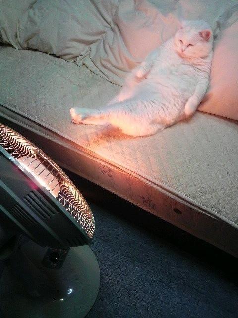 足が暖かい(^o^) http://t.co/nDd8v8Glsf