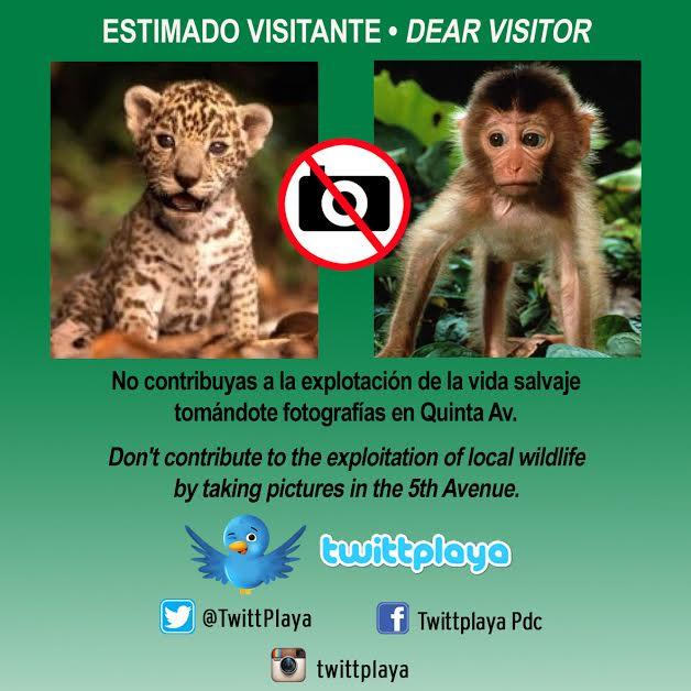 Estimado visitante, no contribuyas a la explotación de la vida salvaje #NoMasFotos http://t.co/4lGMCdlH3E