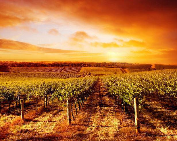 Celebrating Sonoma County  New post by:  http://t.co/EGO8fApN4b  @papapietroperry @DavisWines @TheBarlow707 http://t.co/Prh1URVUuj