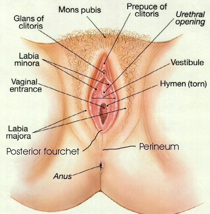 Pee pee hole sex photos and other