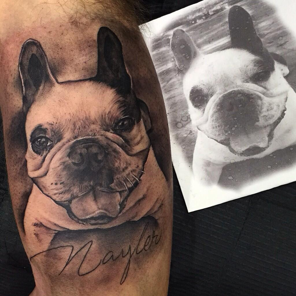 "Tatuaje Bulldog Frances sergio fernández on twitter: "">>bulldog frances (nayler) #tattoo"