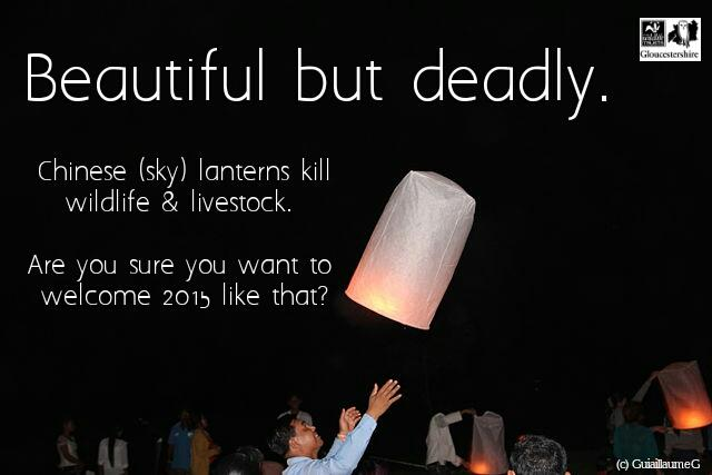 Chinese (sky) lanterns can be harmful to wildlife and livestock, think twice this new years before letting them go... http://t.co/hrO0rwcCiF