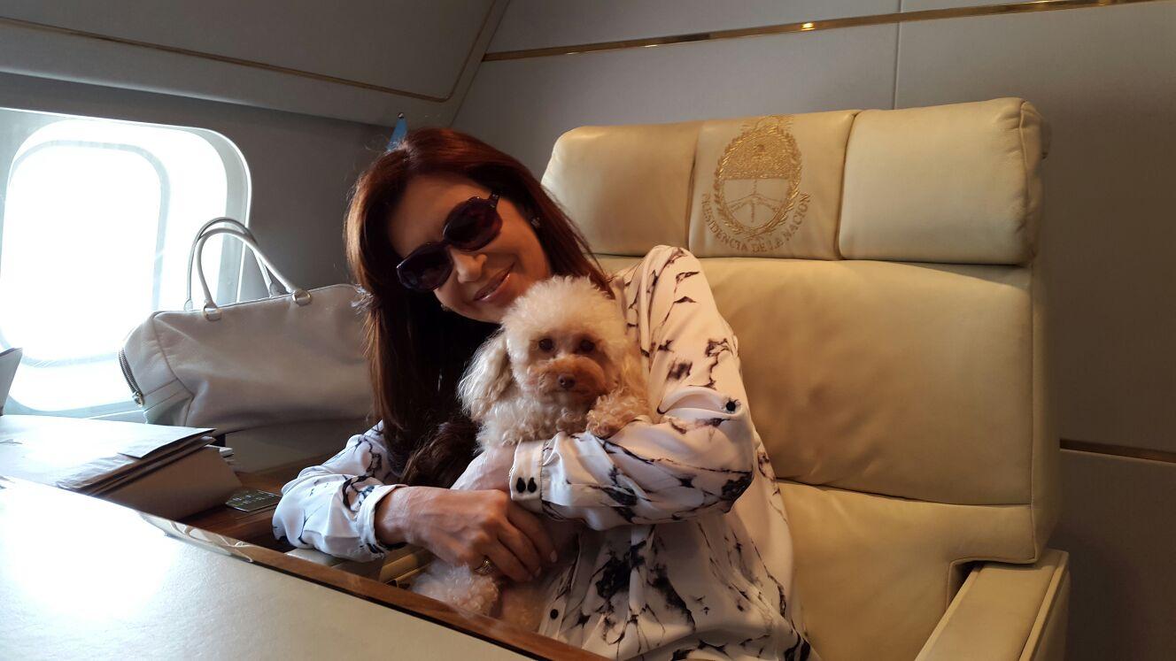 Se podrá viajar con mascotas chicas en Aerolíneas Argentinas