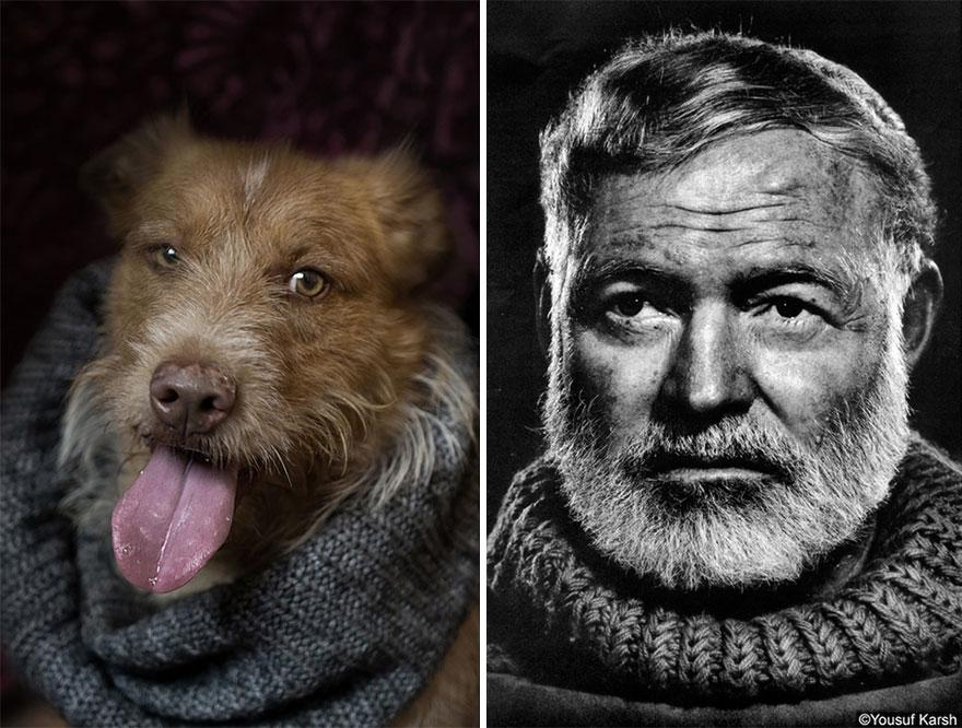 Photo Project Compares Shelter Dogs And Famous Writers' Expressions (here are the Hemingways) http://t.co/3OvgAHBClw http://t.co/Sg952wyHA1