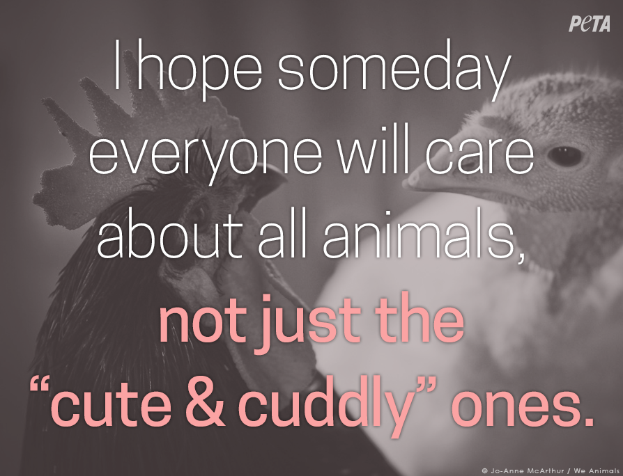 Beautiful Be Kind To Animals Quotes Mesgulsinyali